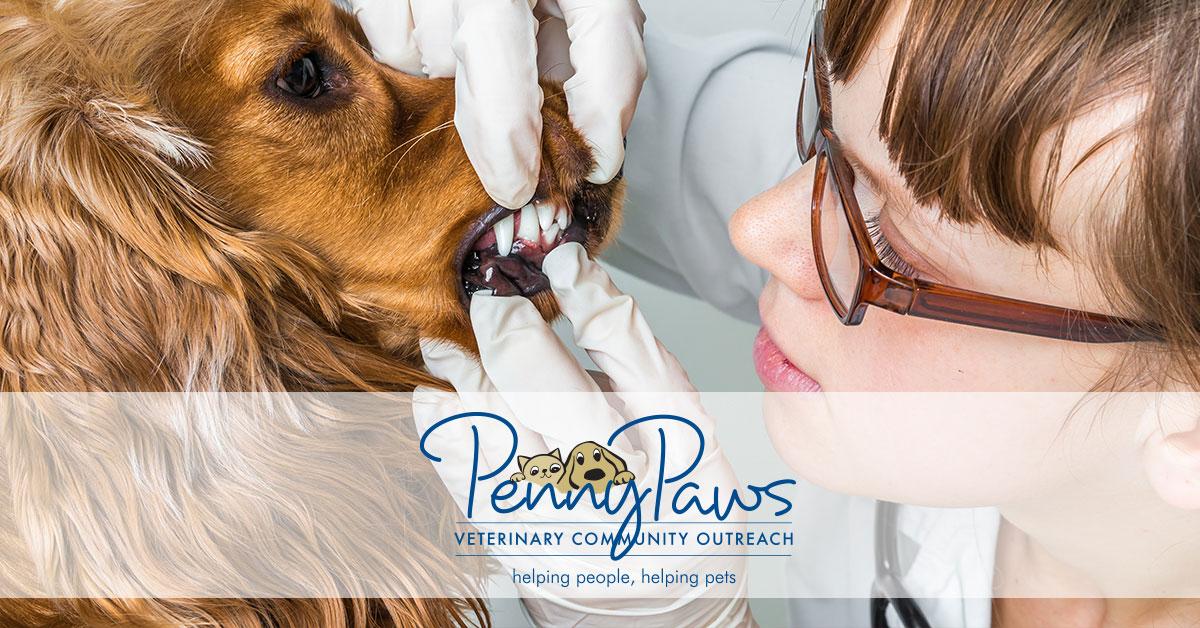 Free Dog Vaccinations In Dallas