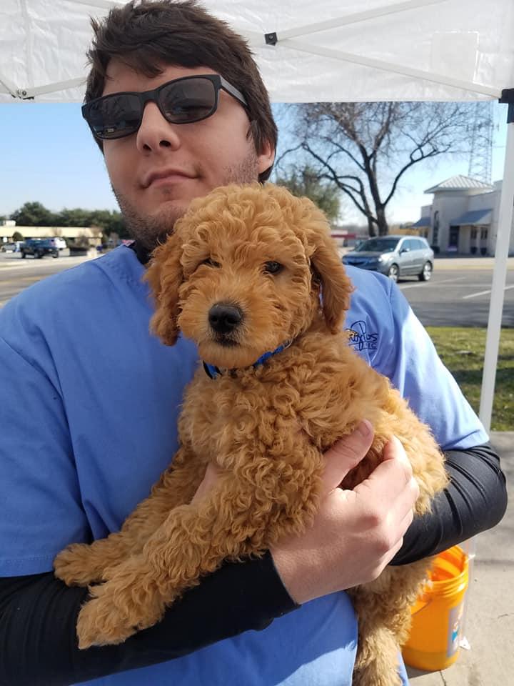 Low Cost Pet Vaccinations Amp Pet Vaccines San Antonio Tx