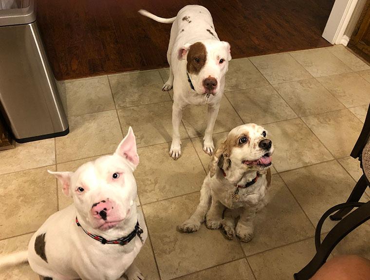 dogs standing on tile floor