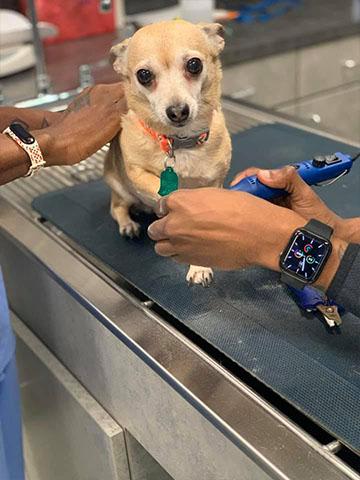 dog nail trim service