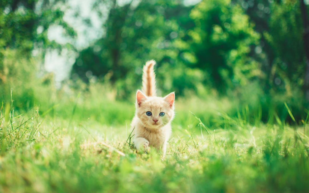 Spaying and Neutering Your Cat: When is the Best Time?