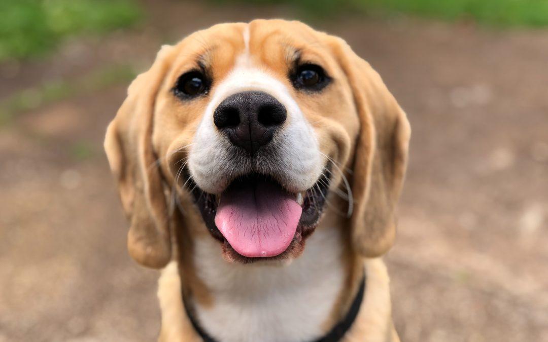 Can Dogs Get the Coronavirus?