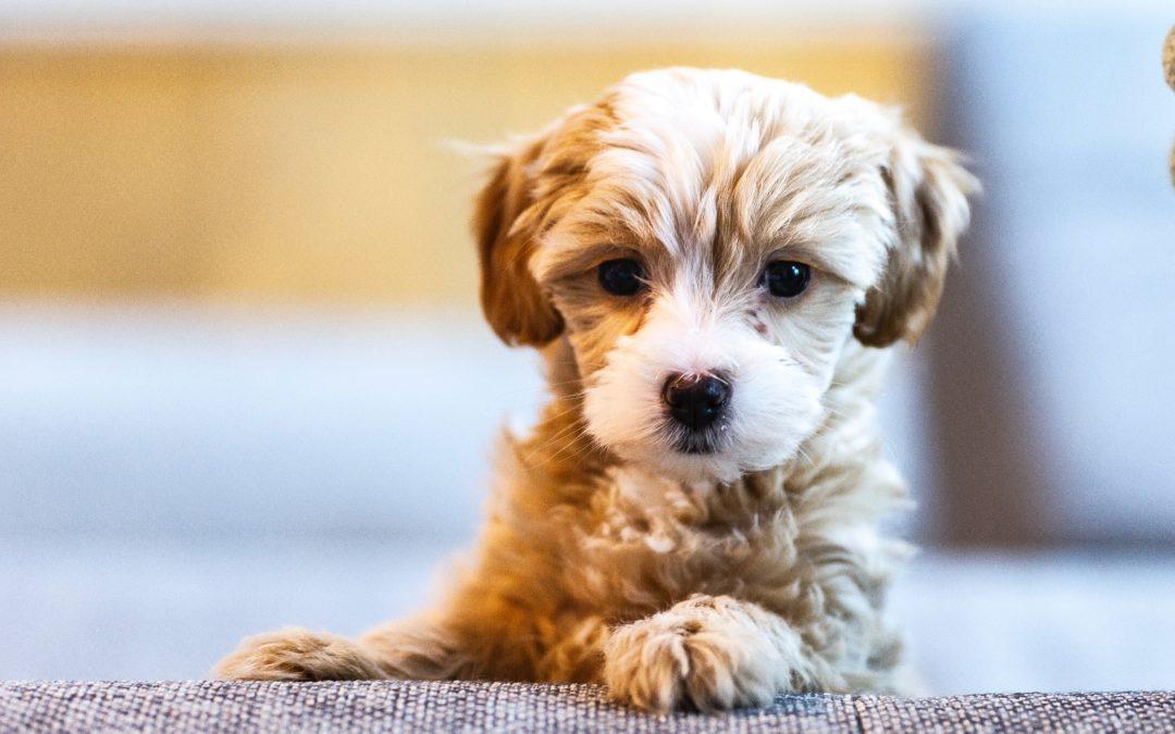 Puppy Shots